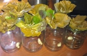 Rauginti agurkai su vynuogių lapais